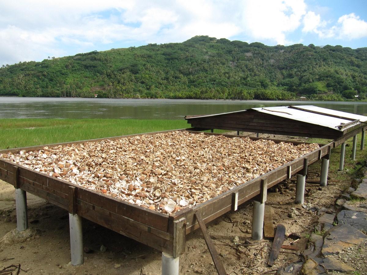 Zpracování kokosových ořechů